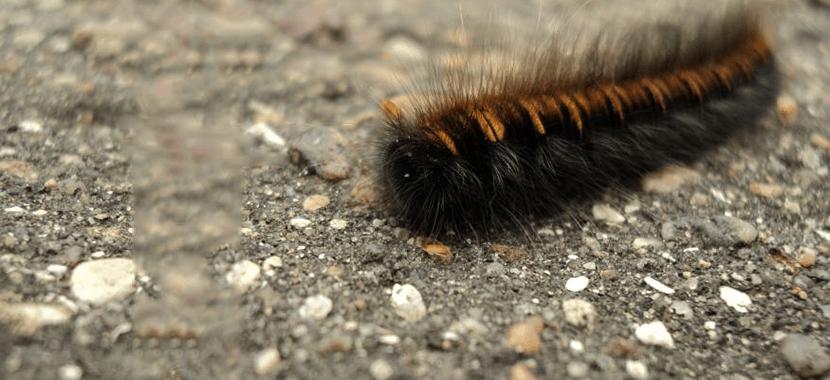 Infestação de lagartas, o que fazer?