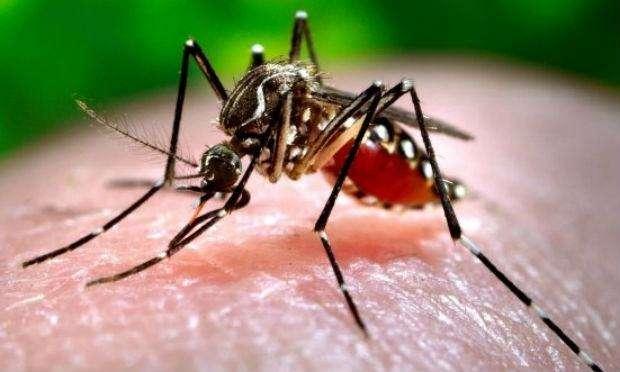 Combate à dengue, chikungunya e zika vírus Desentupir 24h